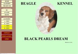 Beagle - Beagles.nl : kennel | Fokker Black Pearls Dream